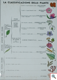 La Classificazione delle piante