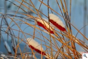 Thype coperte dalla neve solo da una parte (Foto nr. 17)